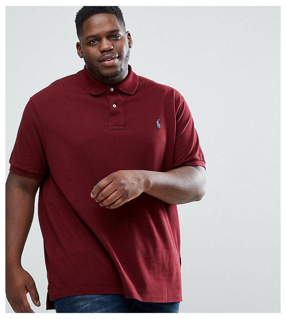 Polo Ralph Lauren PLUS Polo Shirt in Burgundy - Fall burgundy